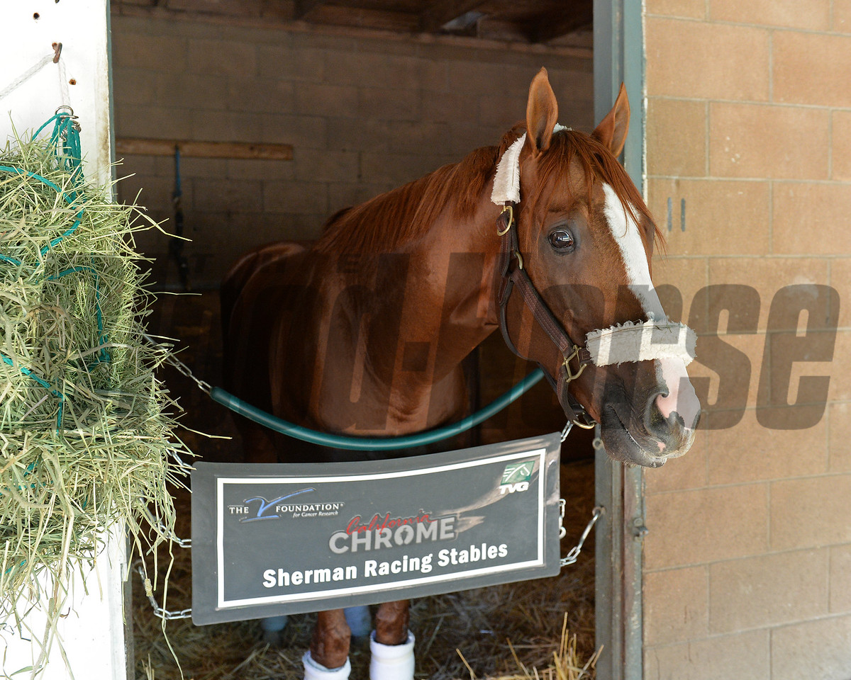 California Chrome <br /> Morning after the Breeders' Cup Classic<br /> 2016 Breeders' Cup on Nov. 6, 2016, in Arcadia, CA.