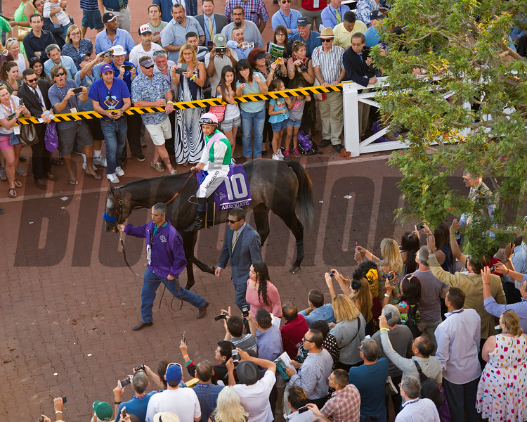 Arrogate<br /> Paddock scenes before the Classic (gr. I) at Santa Anita on Nov. 5, 2016, in Arcadia, California.