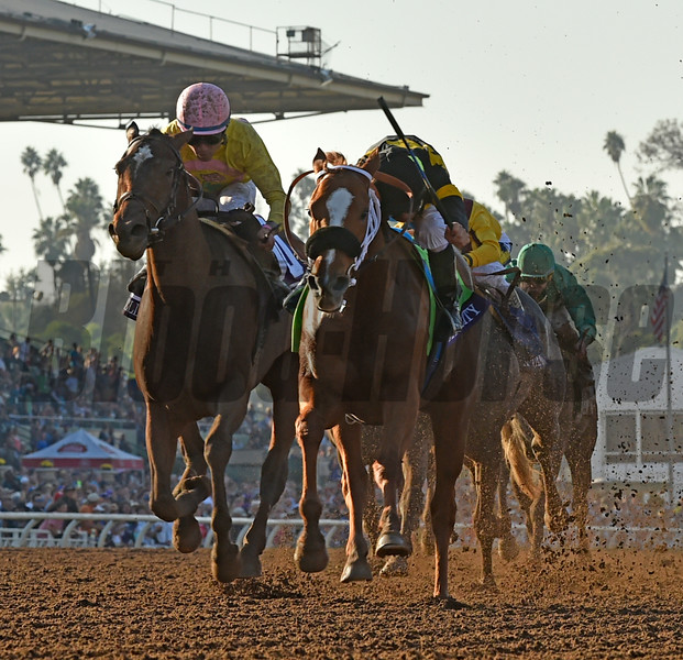 Finest City wins the 2016 Breeders' Cup Filly & Mare Sprint<br /> Skip Dickstein Photo