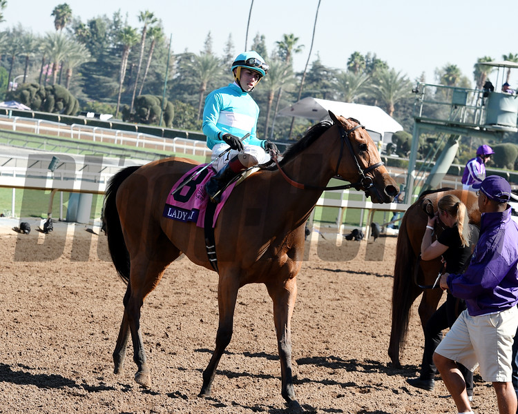 Lady Eli with Irad Ortiz Jr. after finishing second in the Breeders' Cup Filly & Mare Turf at Santa Anita on November 5, 2016.   <br /> Dave Harmon Photo