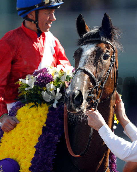 Queen's Trust wins the 2016 Breeders' Cup Filly & Mare Turf<br /> Dave Harmon