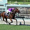 Obviously wins the 2016 Breeders' Cup Turf Sprint<br /> Dave Harmon Photo