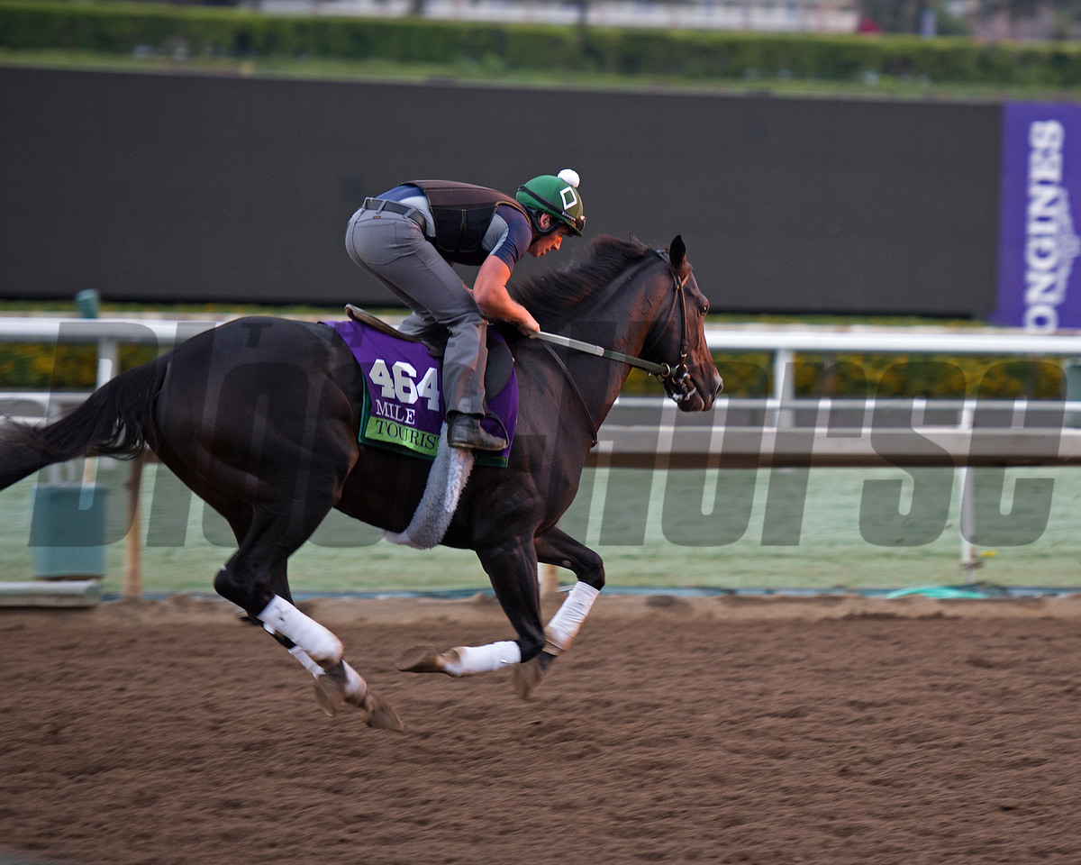 Tourist, Mile.<br /> Works at Santa Anita in preparation for 2016 Breeders' Cup on Oct. 29 2016, in Arcadia, CA.