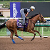 American Gal<br /> Works at Santa Anita in preparation for 2016 Breeders' Cup on Oct. 30, 2016, in Arcadia, CA.