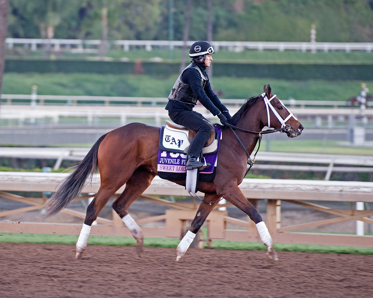 Sweet Loretta<br /> Morning scenes at Santa Anita in preparation for 2016 Breeders' Cup on Nov. 3, 2016, in Arcadia, CA.