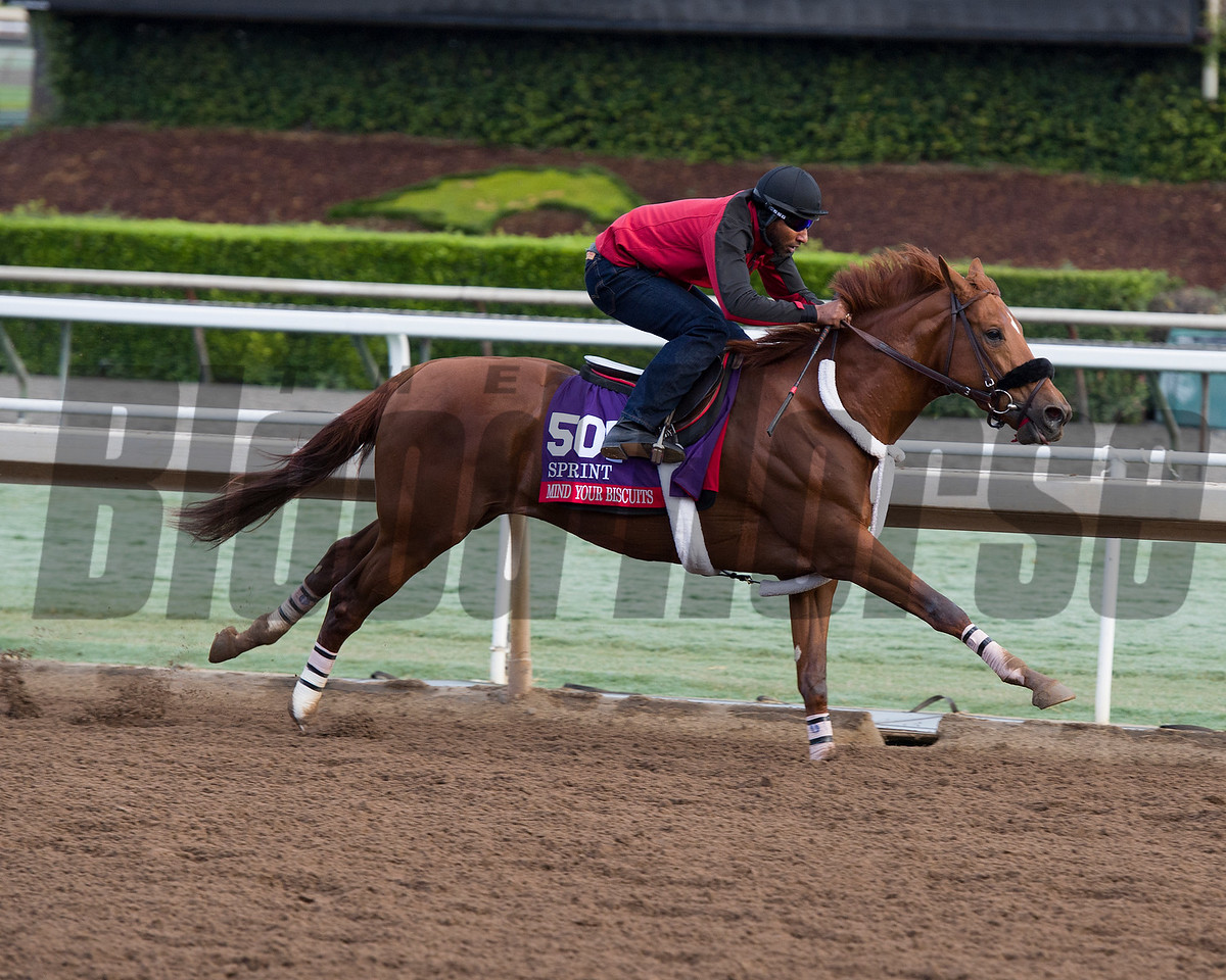 Mind Your Biscuits, Sprint<br /> Works at Santa Anita in preparation for 2016 Breeders' Cup on Oct. 29 2016, in Arcadia, CA.