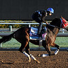 Kitten's Cat Breeders' Cup Juvenile Turf Chad B. Harmon