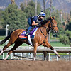 Lady Eli<br /> Morning scenes at Santa Anita in preparation for 2016 Breeders' Cup on Nov. 2, 2016, in Arcadia, CA.