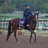 With Honors<br /> Works at Santa Anita in preparation for 2016 Breeders' Cup on Oct. 31, 2016, in Arcadia, CA.