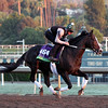 Tourist Breeders' Cup Mile Chad B. Harmon