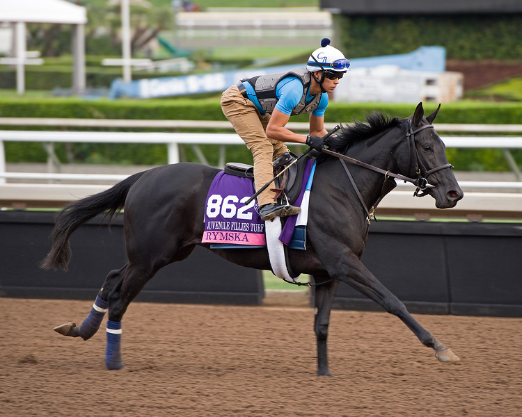 Rymska<br /> Works at Santa Anita in preparation for 2016 Breeders' Cup on Nov. 1, 2016, in Arcadia, CA.
