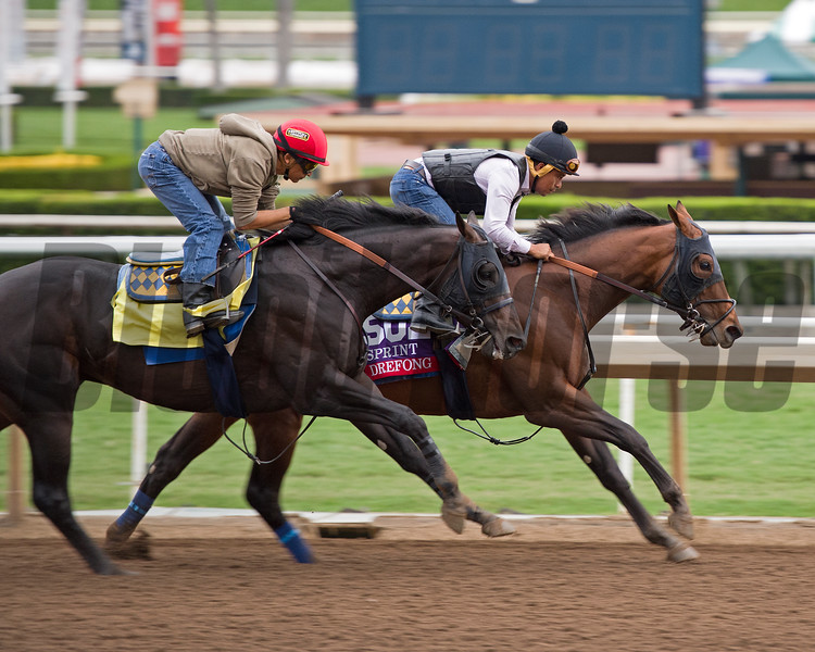 Drefong<br /> Works at Santa Anita in preparation for 2016 Breeders' Cup on Oct. 30, 2016, in Arcadia, CA.