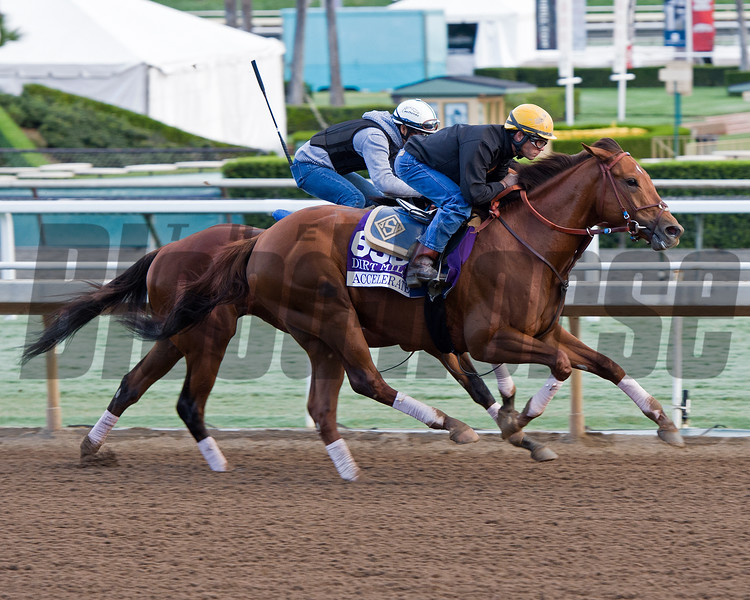 Accelerate, Dirt Mile<br /> Works at Santa Anita in preparation for 2016 Breeders' Cup on Oct. 29 2016, in Arcadia, CA.