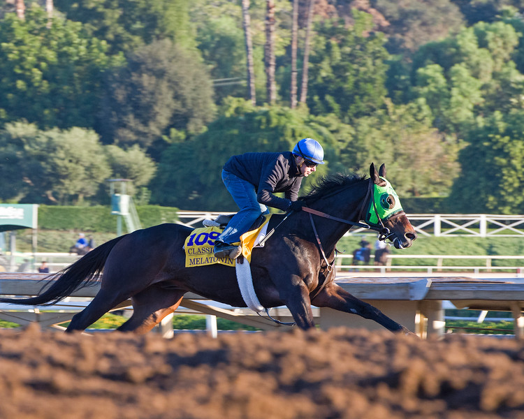 Melatonin with Joe Talamo<br /> Morning scenes at Santa Anita in preparation for 2016 Breeders' Cup on Nov. 2, 2016, in Arcadia, CA.