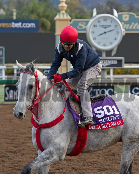 Delta Bluesman, Sprint<br /> Works at Santa Anita in preparation for 2016 Breeders' Cup on Oct. 29 2016, in Arcadia, CA.