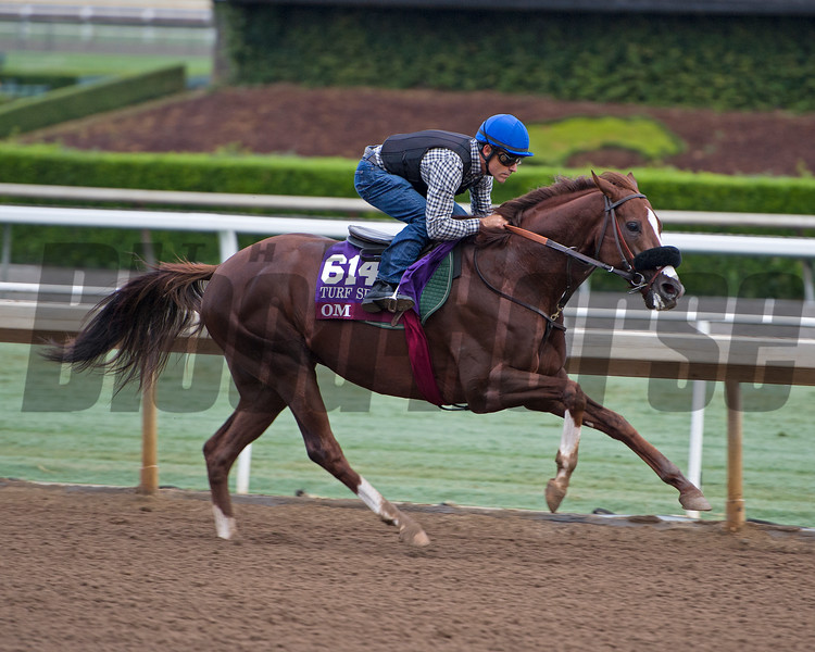 Om<br /> Works at Santa Anita in preparation for 2016 Breeders' Cup on Oct. 31, 2016, in Arcadia, CA.