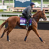 Rodaini<br /> Works at Santa Anita in preparation for 2016 Breeders' Cup on Nov. 1, 2016, in Arcadia, CA.
