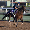 Haveyougoneaway gallops at Santa Anita Nov. 2, 2016 in preparation for her appearance in the Breeders' Cup in Arcadia, California.  Photo by Skip Dickstein