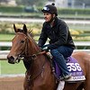 Gomo<br /> Works at Santa Anita in preparation for 2016 Breeders' Cup on Nov. 1, 2016, in Arcadia, CA.