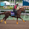 Channel Maker<br /> Works at Santa Anita in preparation for 2016 Breeders' Cup on Oct. 31, 2016, in Arcadia, CA.