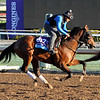 Wellabled Breeders' Cup Juvenile Turf Chad B. Harmon