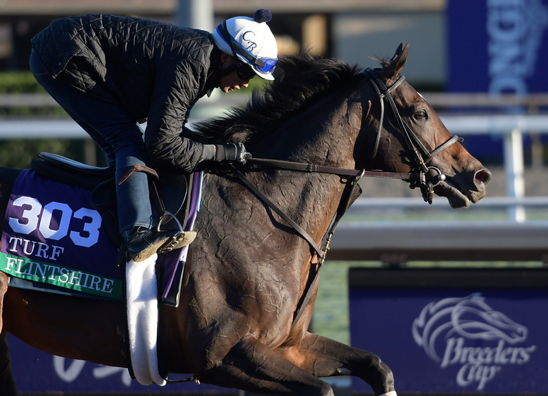 Flintshire gallops at Santa Anita Nov. 2, 2016 in preparation for his appearance in the Breeders' Cup in Arcadia, California.  Photo by Skip Dickstein