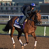Accelerate out for a gallop at Santa Anita Nov. 3, 2016 in preparation for her appearance in the Breeders' Cup in Arcadia, California.  Photo by Skip Dickstein