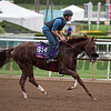 Om<br /> Works at Santa Anita in preparation for 2016 Breeders' Cup on Oct. 30, 2016, in Arcadia, CA.