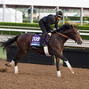 Term of Art<br /> Works at Santa Anita in preparation for 2016 Breeders' Cup on Nov. 1, 2016, in Arcadia, CA.