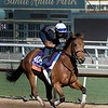 Lady Eli gallops at Santa Anita Nov. 2, 2016 in preparation for her appearance in the Breeders' Cup in Arcadia, California.  Photo by Skip Dickstein