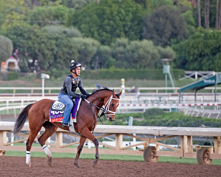 Al's Gal<br /> Morning scenes at Santa Anita in preparation for 2016 Breeders' Cup on Nov. 3, 2016, in Arcadia, CA.