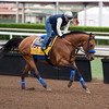 Hoppertunity<br /> Works at Santa Anita in preparation for 2016 Breeders' Cup on Nov. 1, 2016, in Arcadia, CA.