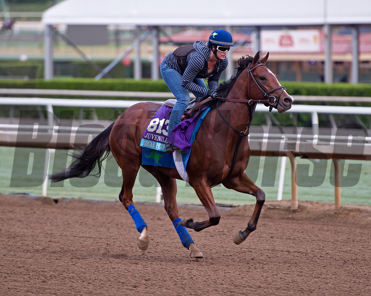 Oscar Performance<br /> Works at Santa Anita in preparation for 2016 Breeders' Cup on Oct. 31, 2016, in Arcadia, CA.