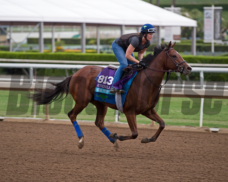 Oscar Performance<br /> Works at Santa Anita in preparation for 2016 Breeders' Cup on Oct. 30, 2016, in Arcadia, CA.