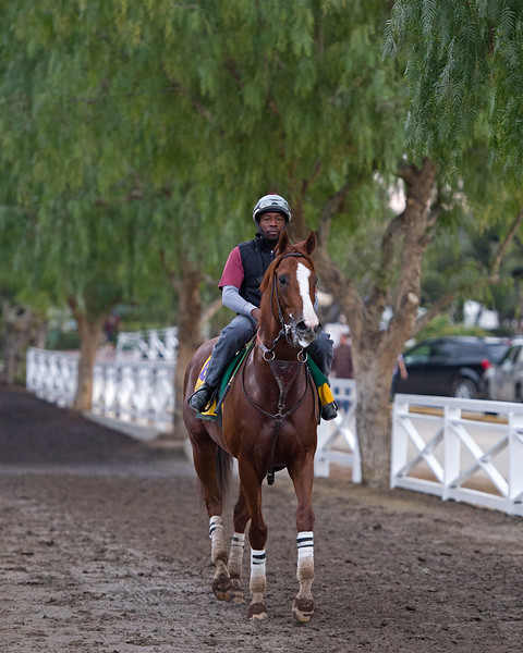 California Chrome with Dihigi Gladney<br /> Works at Santa Anita in preparation for 2016 Breeders' Cup on Nov. 1, 2016, in Arcadia, CA.