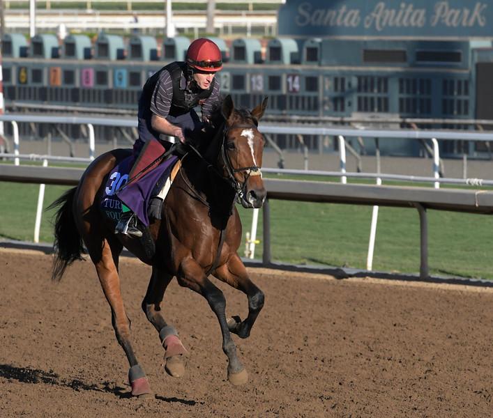 Found out for a gallop at Santa Anita Nov. 3, 2016 in preparation for her appearance in the Breeders' Cup in Arcadia, California.  Photo by Skip Dickstein