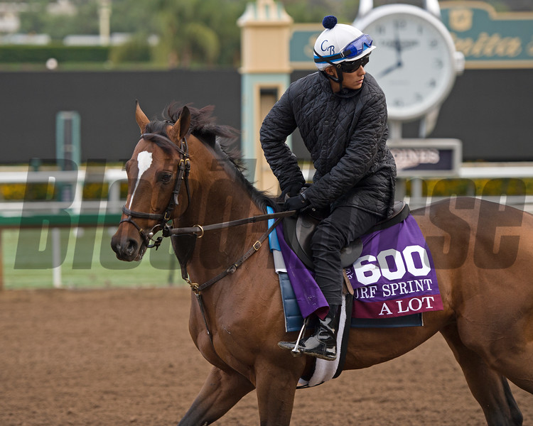 A Lot<br /> Works at Santa Anita in preparation for 2016 Breeders' Cup on Oct. 31, 2016, in Arcadia, CA.