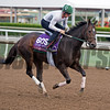 Celestine<br /> Works at Santa Anita in preparation for 2016 Breeders' Cup on Oct. 31, 2016, in Arcadia, CA.