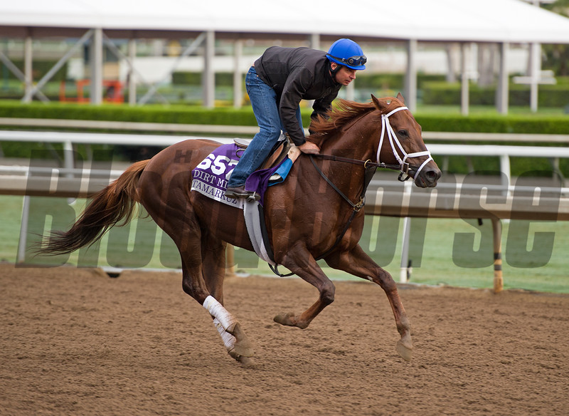 Tamarkuz<br /> Works at Santa Anita in preparation for 2016 Breeders' Cup on Oct. 31, 2016, in Arcadia, CA.