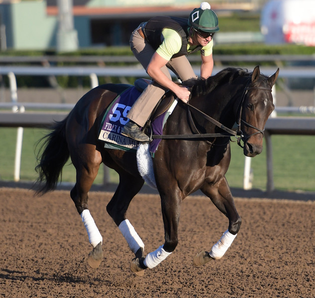 Carina Mia out for a gallop at Santa Anita Nov. 3, 2016 in preparation for her appearance in the Breeders' Cup in Arcadia, California.  Photo by Skip Dickstein