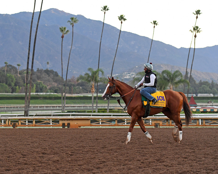 California Chrome<br /> Morning scenes at Santa Anita in preparation for 2016 Breeders' Cup on Nov. 2, 2016, in Arcadia, CA.