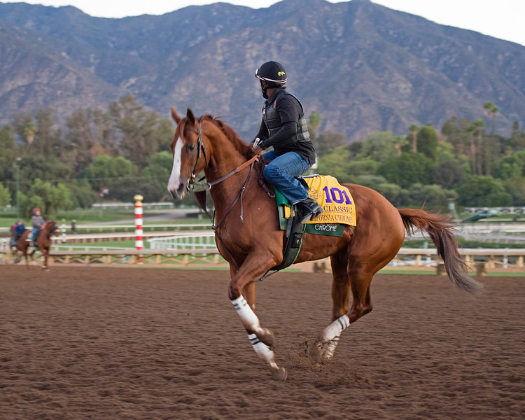 California Chrome<br /> Morning scenes at Santa Anita in preparation for 2016 Breeders' Cup on Nov. 3, 2016, in Arcadia, CA.