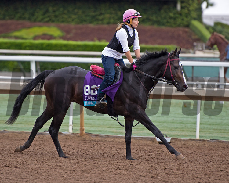 Harbour Master<br /> Works at Santa Anita in preparation for 2016 Breeders' Cup on Oct. 31, 2016, in Arcadia, CA.