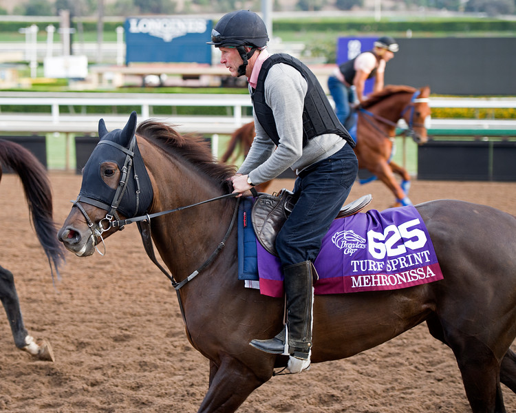 Mehronissa<br /> Works at Santa Anita in preparation for 2016 Breeders' Cup on Nov. 1, 2016, in Arcadia, CA.