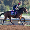 Found<br /> Morning scenes at Santa Anita in preparation for 2016 Breeders' Cup on Nov. 3, 2016, in Arcadia, CA.