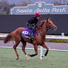 Dutch Connection<br /> Works at Santa Anita in preparation for 2016 Breeders' Cup on Nov. 1, 2016, in Arcadia, CA.