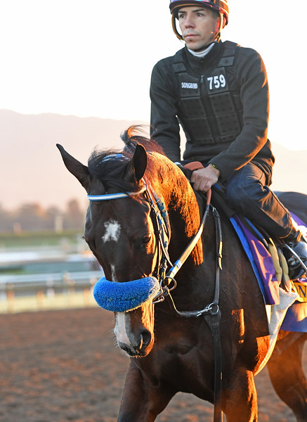 Songbird<br /> Morning scenes at Santa Anita in preparation for 2016 Breeders' Cup on Nov. 2, 2016, in Arcadia, CA.