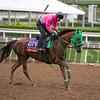 Nuovo Record<br /> Works at Santa Anita in preparation for 2016 Breeders' Cup on Oct. 30, 2016, in Arcadia, CA.