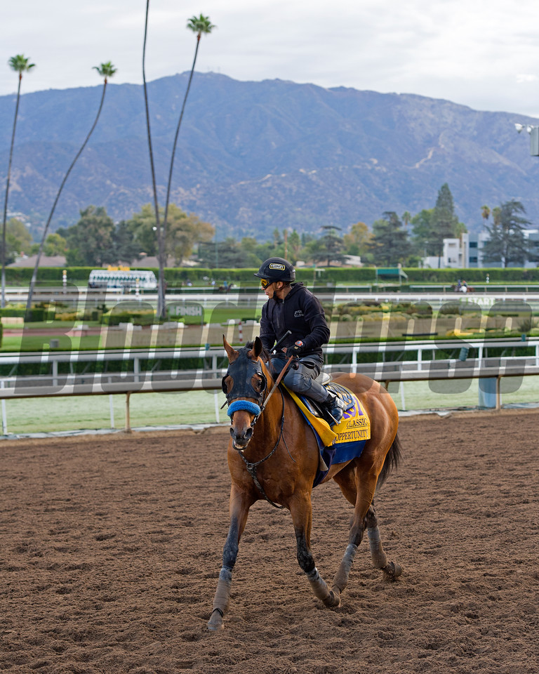 Hoppertunity, Classic.<br /> Works at Santa Anita in preparation for 2016 Breeders' Cup on Oct. 29 2016, in Arcadia, CA.