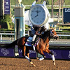 Theory Breeders' Cup Juvenile Chad B. Harmon